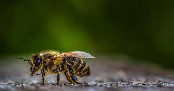 Как избавиться от аллергии на укусы пчел