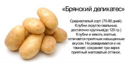 Картофель брянский деликатес: описание сорта, фото, отзывы, урожайность, вкусовые качества