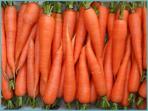 Морковь алтайская лакомка: описание, характеристика сорта, отзывы