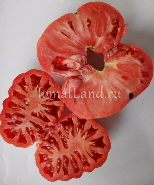 Сорт помидор «инжир» и его разновидности