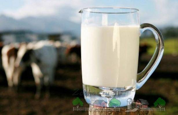 Почему у коровы солёное молоко: причины и решение проблемы