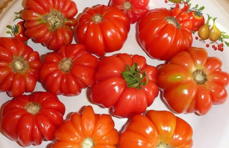 Сорт томата Гармошка: отзывы + фото