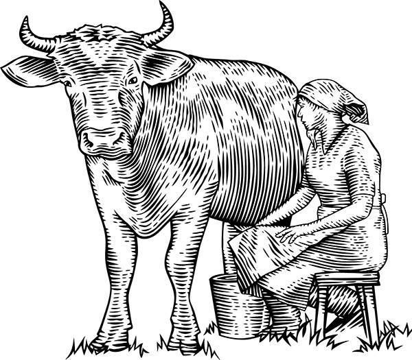 Коровьи рога: строение, травмы, различные методы удаления