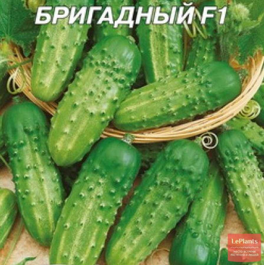 Огурцы «шоша f1»