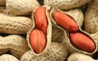 Чем полезен и чем вреден арахис | польза и вред