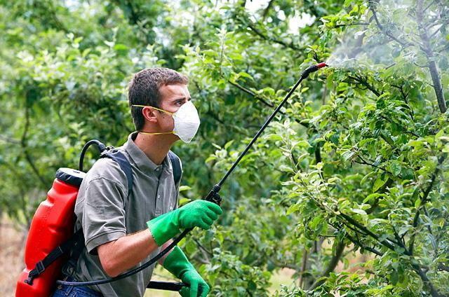 Чем обработать грушу весной и осенью