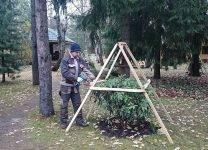 Уход за рододендроном осенью и подготовка к зиме — когда укрывают азалию, вечнозеленые, молодые кусты в разных областях