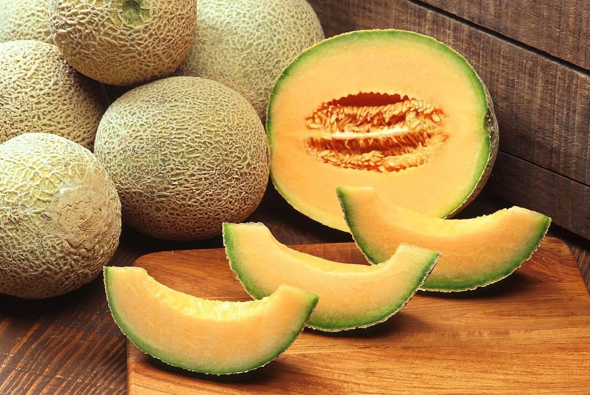 Особенности выращивания гибридов: американская дыня (ананас) - посадка, размножение и уход