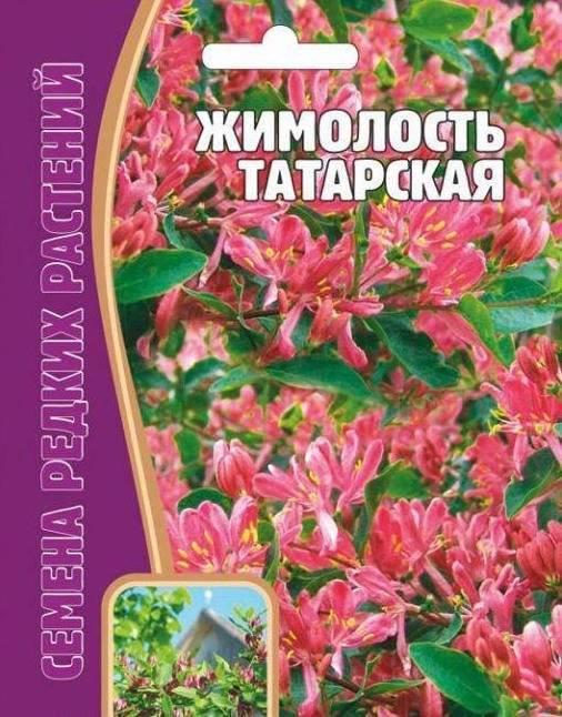 Татарская жимолость: неприхотливый декоративный кустарник