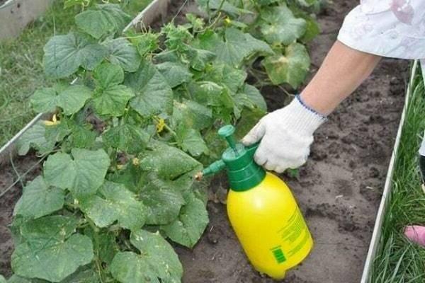 Инструкция по применению удобрения азофоски (нитроаммофоски) на огороде