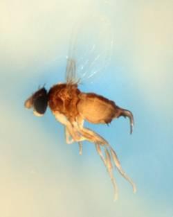 Самые распространённые болезни пчёл и их лечение