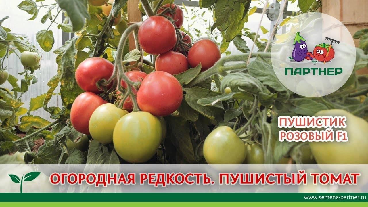 Обзор томатов агрофирмы партнер