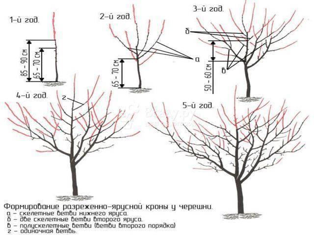 Основные правила и схемы обрезки персика весной и осенью