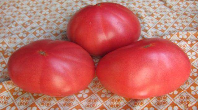 Неприхотливый сорт томата «розовое чудо f1», рекомендации по уходу, описание и фото