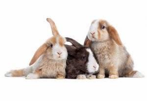 Породы кроликов: какие виды бывают?
