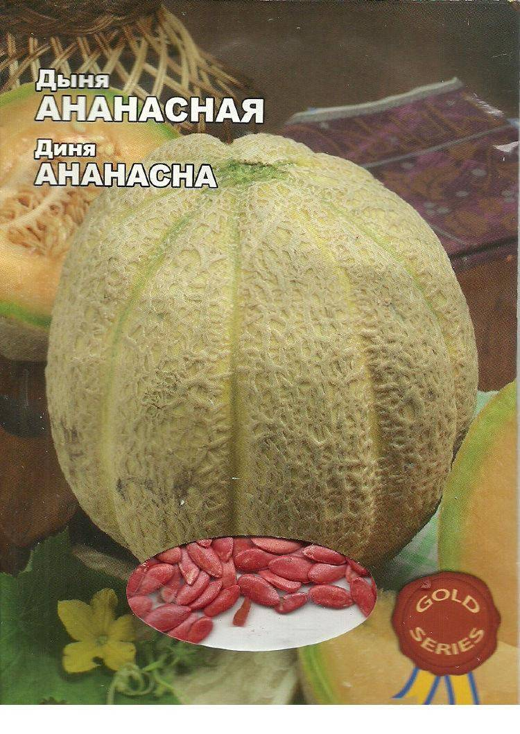Описание сорта дыни карамель, особенности выращивания и ухода