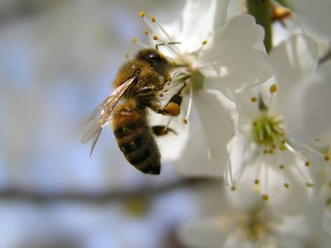 Болезни пчёл: симптомы, лечение и профилактика
