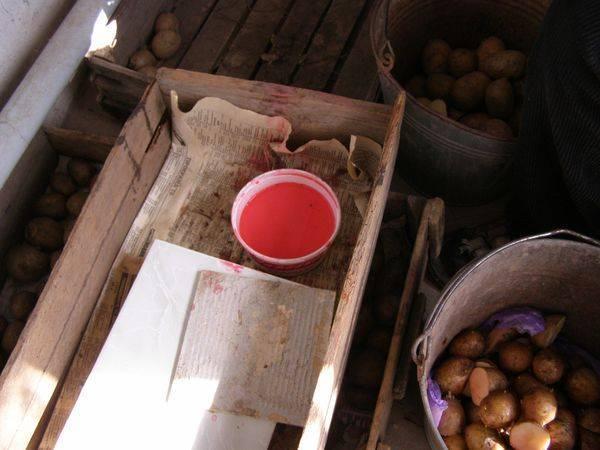 Как подготовить картофель к посадке: 3 варианта подготовки картофеля к посадке.