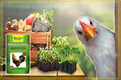 Как сделать компост из куриного помета: способы приготовления удобрения и дозировки ингредиентов
