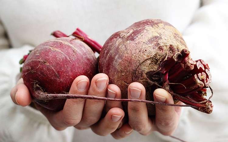 Польза сырой свеклы и вред ее для организма человека: свойства корнеплода, всегда ли можно есть свежий овощ, сколько нужно употреблять для укрепления здоровья?