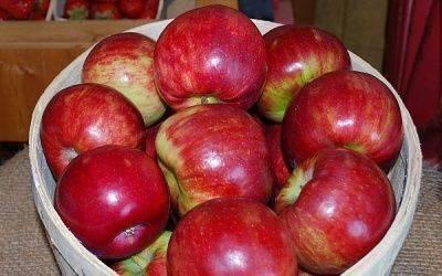 Яблоня кортланд описание сорта