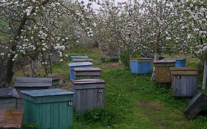 Правильная подкормка пчёл на зиму и цели её применения