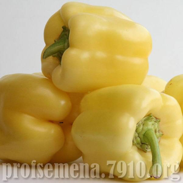 Описание сорта томата мадонна f1, особенности выращивания и ухода