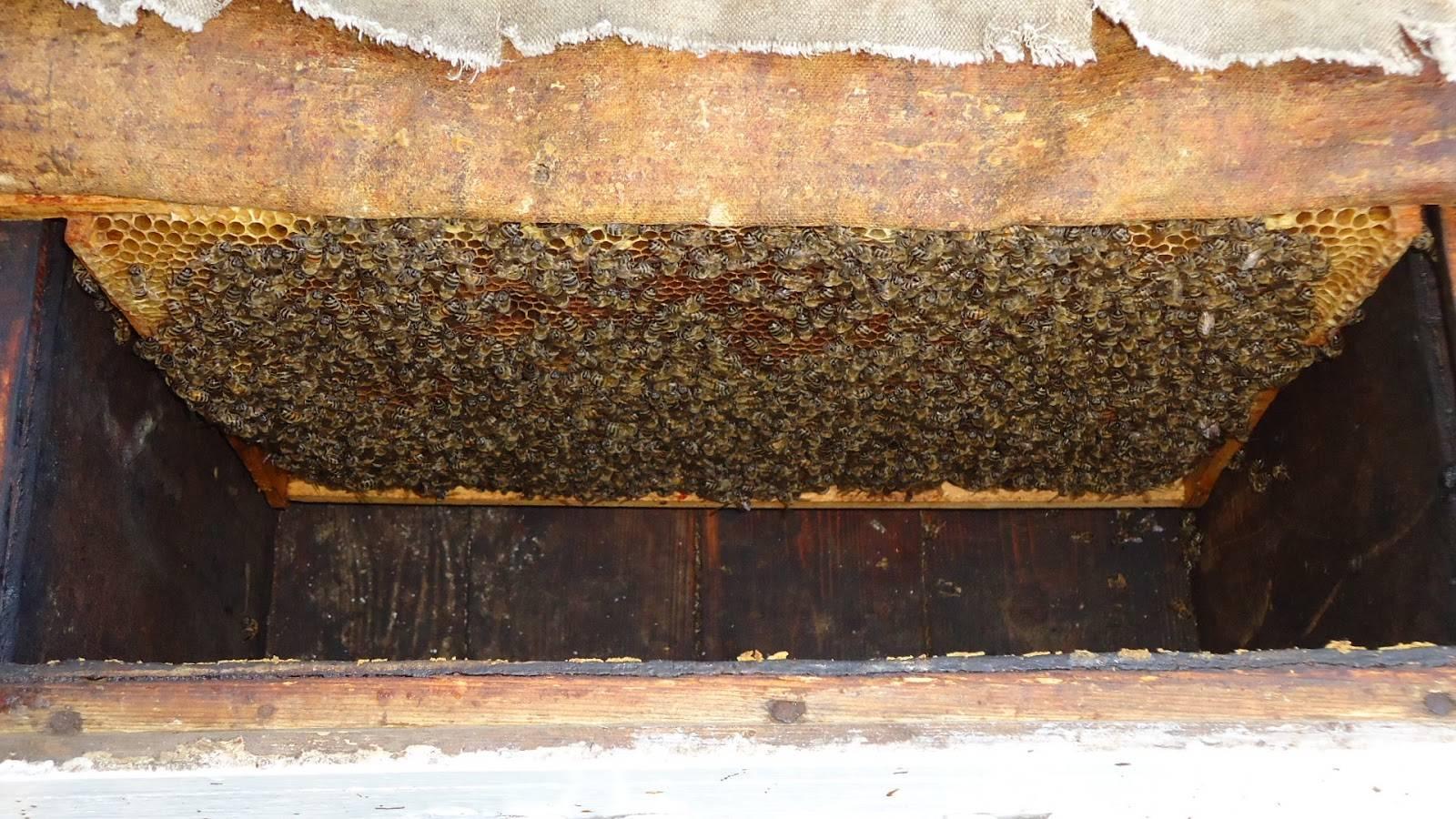 Формирование отводков пчел и их виды