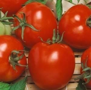 Среднеранние сорта томатов: алфавитный перечень помидор с рекомендациями по выращиванию в открытом грунте и теплицам