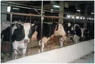 Биохимический анализ крови у коровы - общая информация - 2020