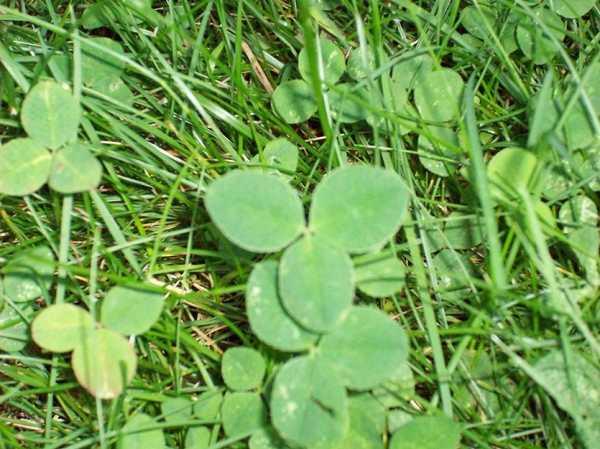 Описание, правила и особенности применения гербицида от сорняков линтур