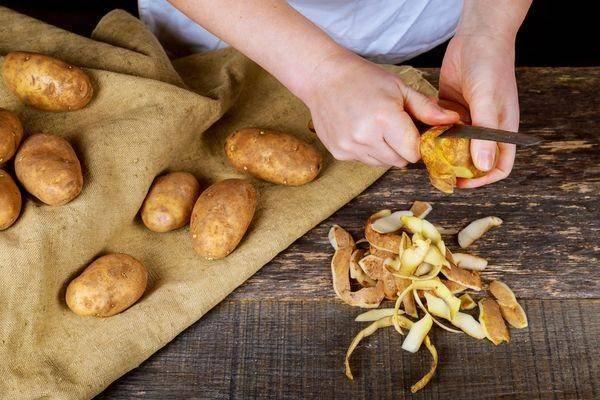 Как использовать картофельные очистки для смородины: лучшее удобрение и правила его использования (110 фото)