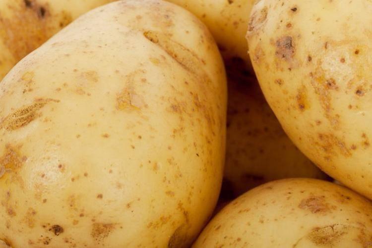 Картофель астерикс: описание сорта, характеристика и фото