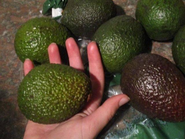 Что такое авокадо и как его едят