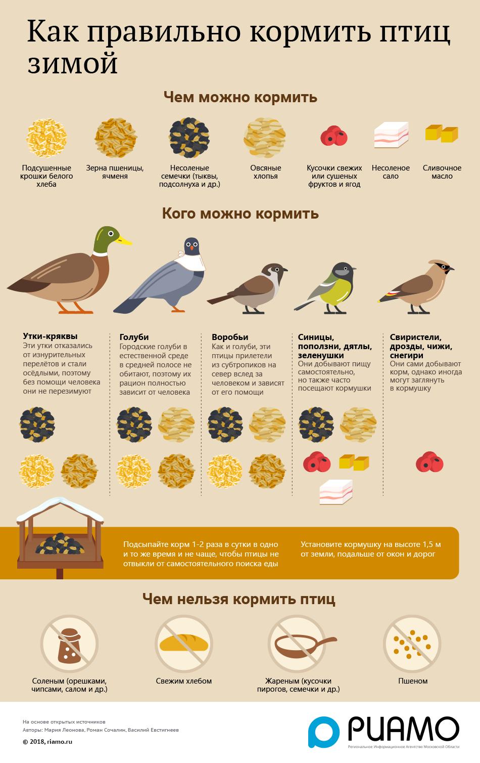 Чем нужно кормить птенца голубя в домашних условиях - общая информация - 2020