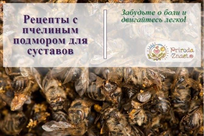 Подмор пчелиный при лечении суставов