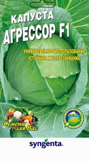 Капуста агрессор – неприхотливый гибрид для выращивания в самых суровых условиях