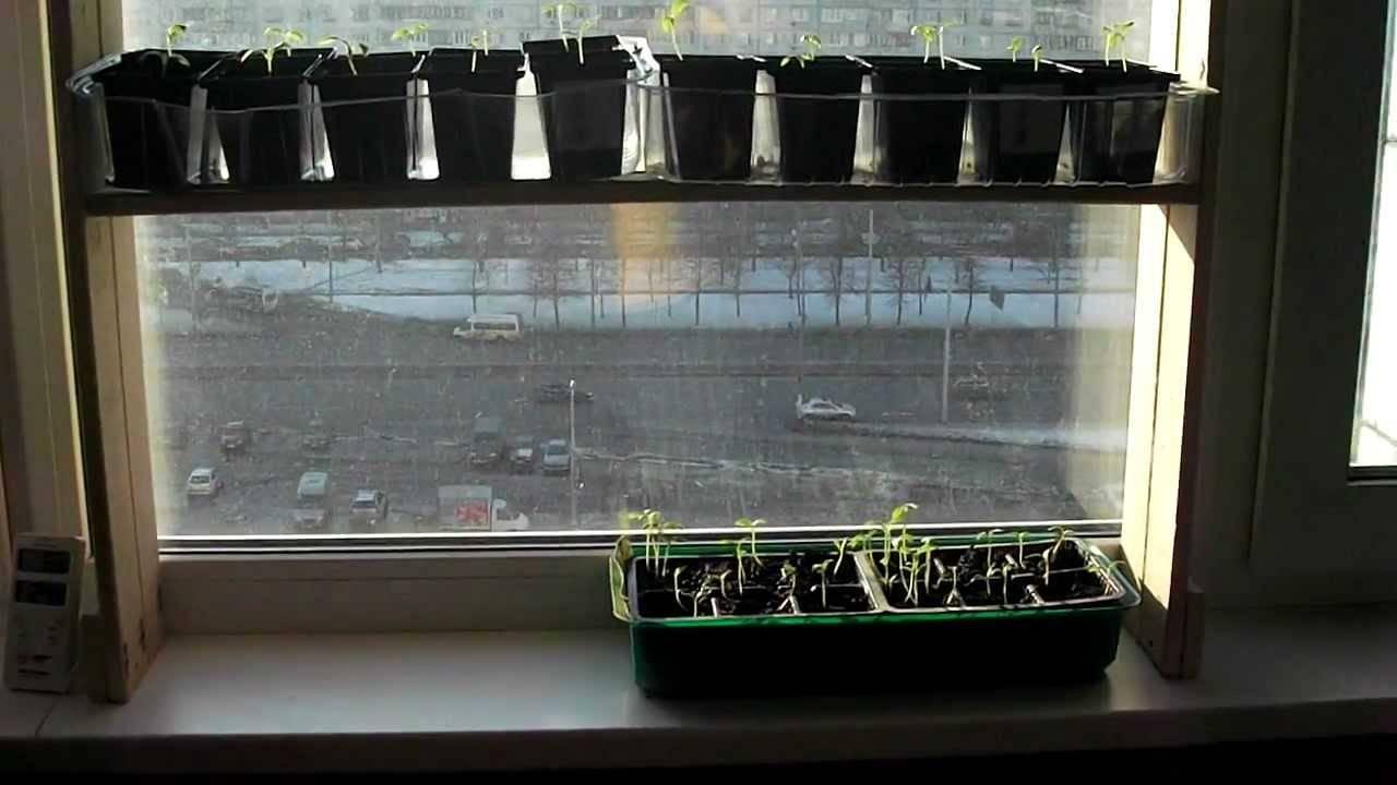 Подсветка для рассады: выбор лампы и обзор стеллажей, сделанных своими руками