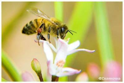 Как появляются трутовки в пчелиной семье