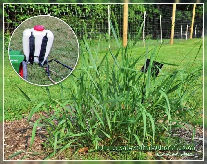 Как избавиться от сорняков и травы в огороде навсегда