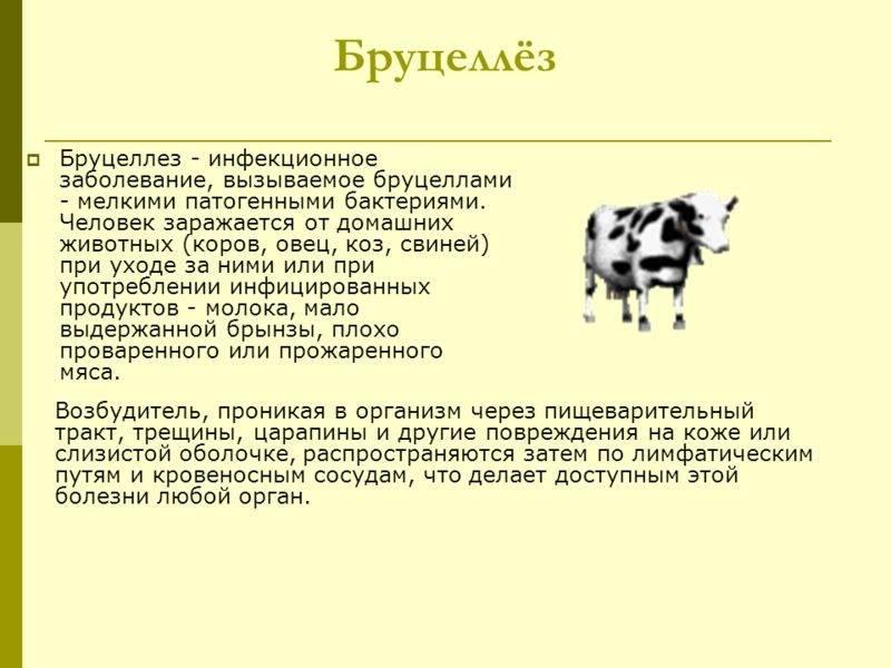 Диагностика и лечение трихомоноза коров