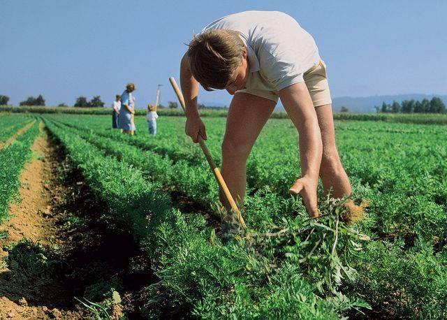 Гербицид граунд — защита от сорняков: отзывы