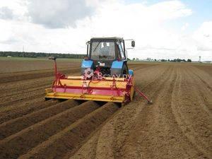 Как посадить картофель без перекопки земли