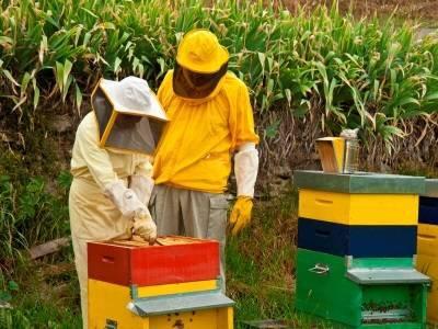 Весенняя ревизия пчелиных семей - начинающему пчеловоду