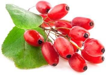Полезные свойства барбариса и противопоказания к употреблению