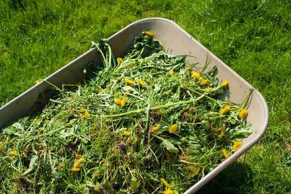 Как приготовить удобрение из сорняков