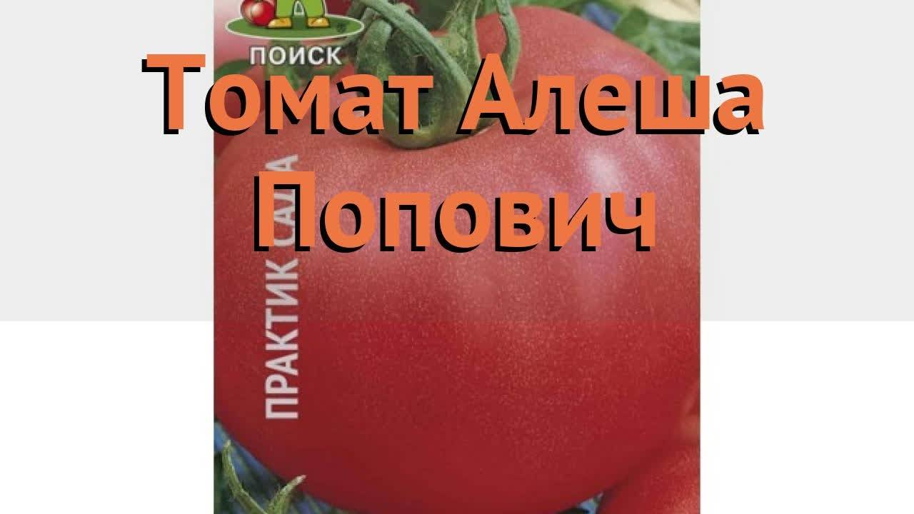 Характеристика и описание томата «алеша попович»
