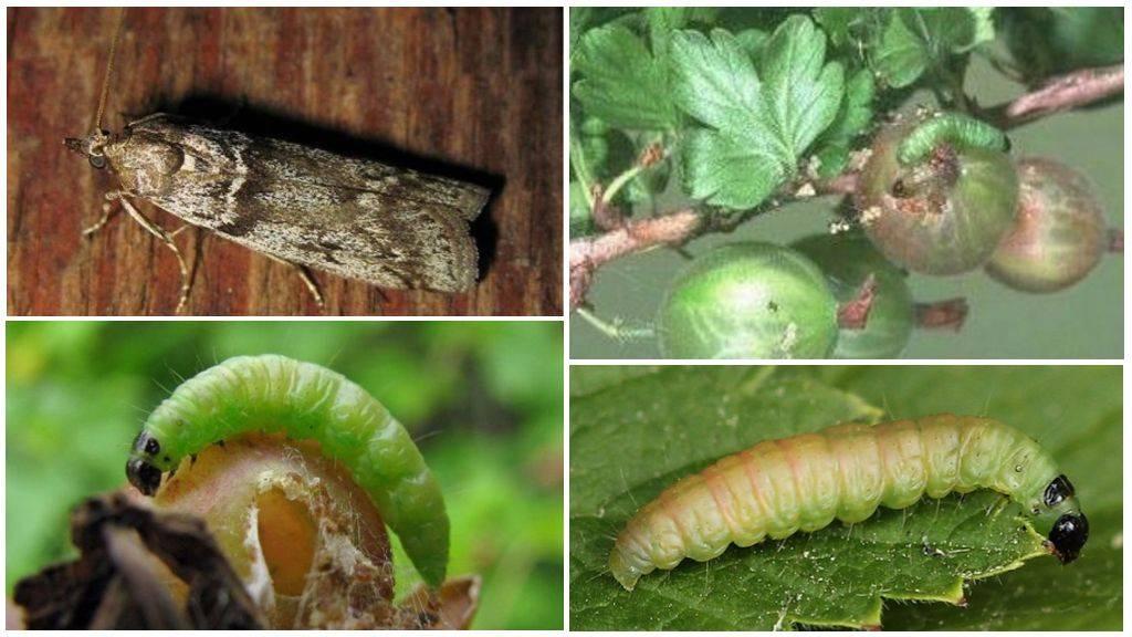 Пилильщики разных видов: отличия и меры борьбы с вредителями