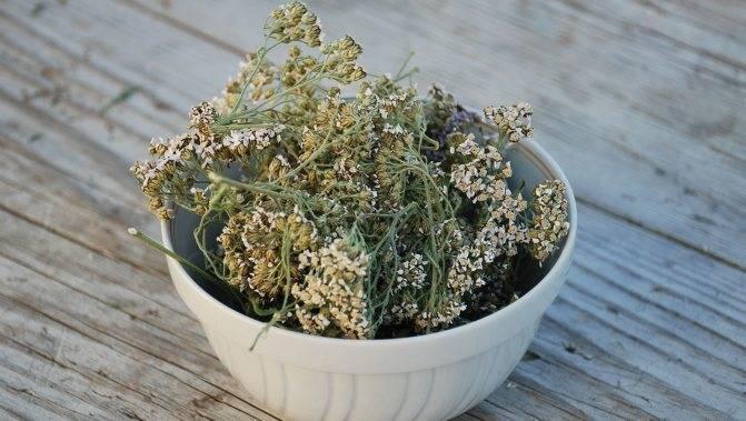 Лекарственное растение бессмертник песчаный: фото травы, полезные свойства и противопоказания, лечебные рецепты применения цветков