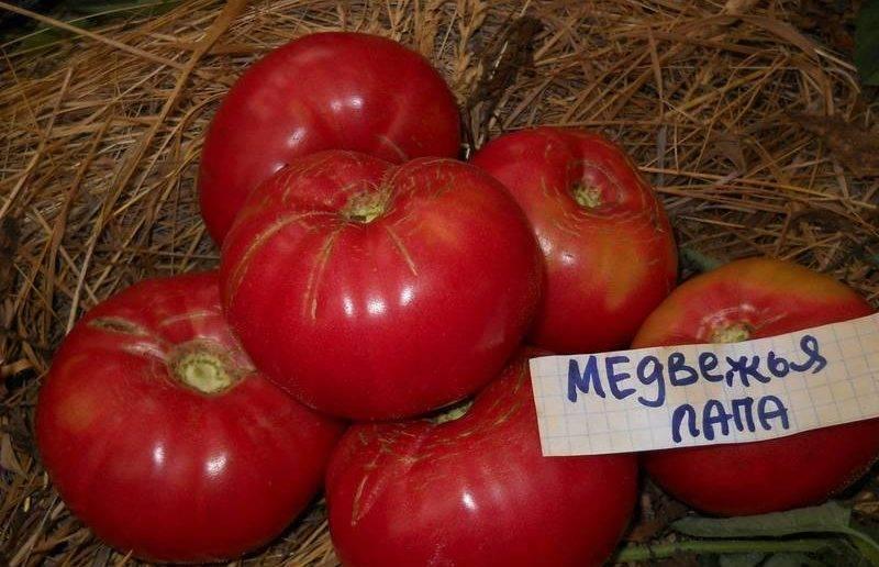 Томат цыган отзывы фото урожайность